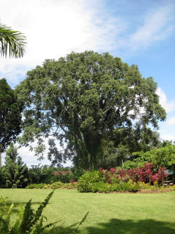 The beautifully landscaped grounds of the Boma hotel in Entebbe