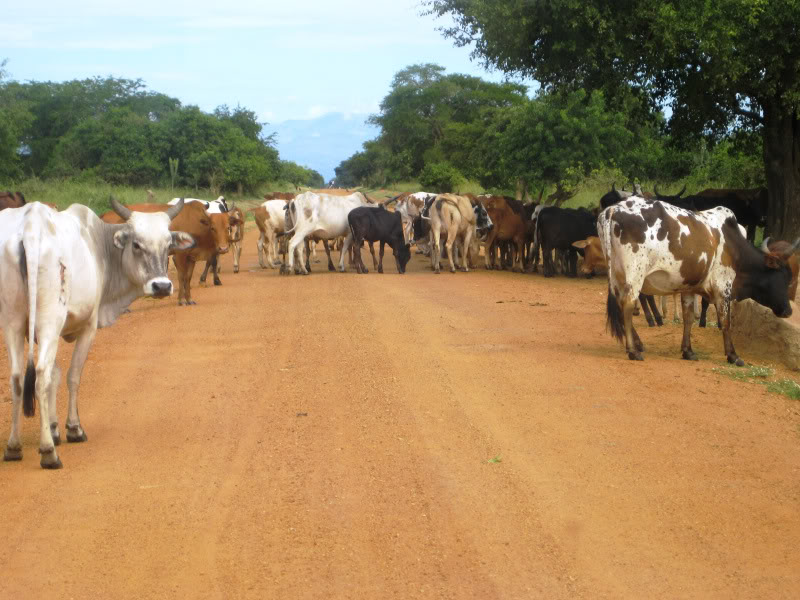 Ugandan traffic jam