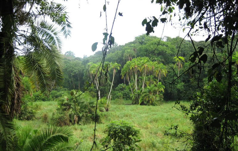 African Adventure- from Hoima to Kibale Forest
