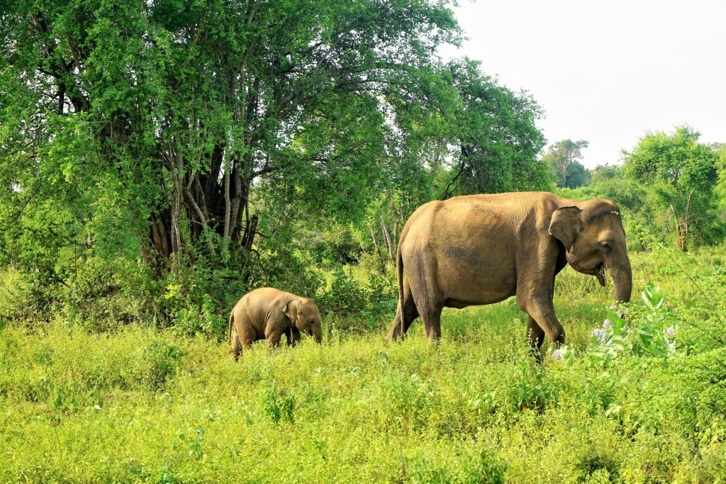 Best things to do in Sri Lanka www.myadventurebucket.com
